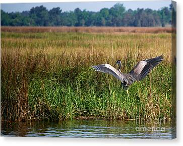 Take Off Canvas Print by Linda Mesibov
