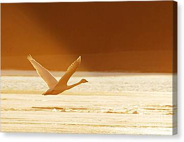 Takeoff At Sunset Canvas Print by Larry Ricker