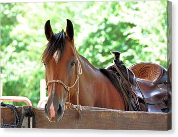 Taking A Break Canvas Print by Jan Amiss Photography