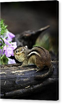 Taking Time To Smell The Flowers Canvas Print by Rob Travis