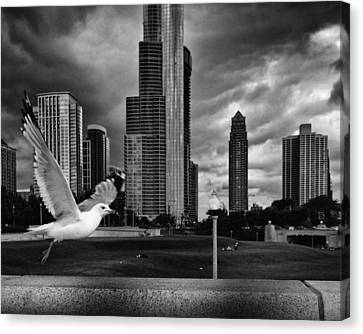 Canvas Print featuring the photograph Taking Wing by Coby Cooper