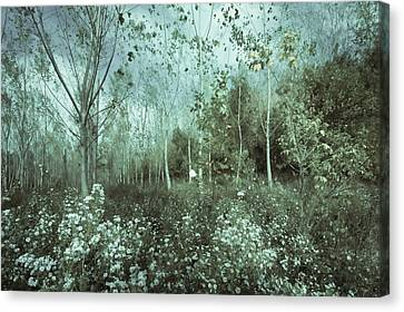 Tale Of The Seasons Canvas Print by Akos Kozari