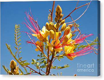 Tall And Bright Canvas Print by Bob and Nancy Kendrick