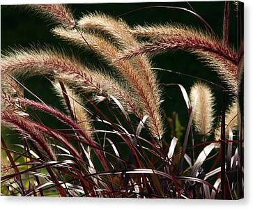 Tall Grass Canvas Print by Jim Nelson