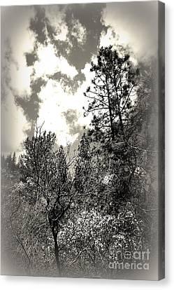 Tall Trees In Lake Shasta Canvas Print by Garnett  Jaeger