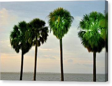 Tampa Bay Canvas Print by Bill Cannon