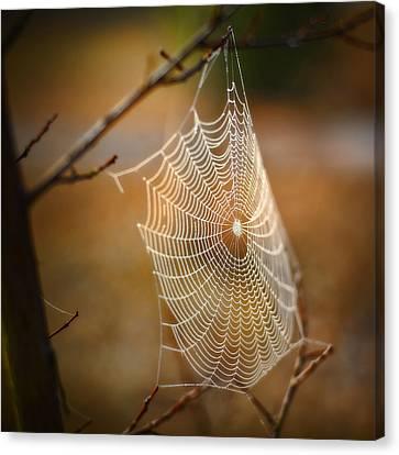Tangled Web Canvas Print by Brenda Bryant