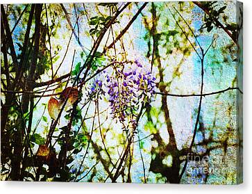 Tangled Wisteria Canvas Print by Andee Design