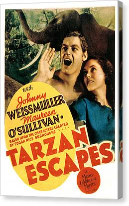 Sullivan Canvas Print - Tarzan Escapes, Johnny Weissmuller by Everett