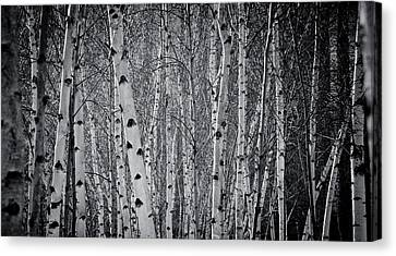 Tate Modern Trees Canvas Print by Lenny Carter