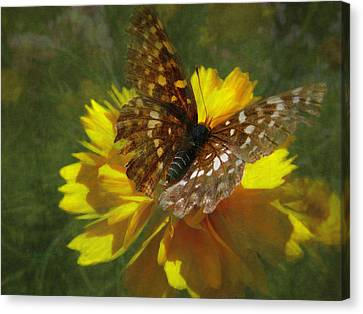 Tattered Wings Canvas Print by Cindy Wright
