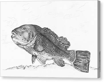 Tautog Canvas Print by Kathleen Kelly Thompson