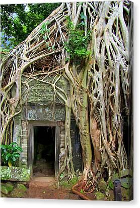 Te Prohm Temple Tree Overgrowth 3 Canvas Print