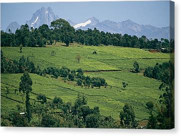 Tea Plantations Covering The Hills Canvas Print by Michael S. Lewis