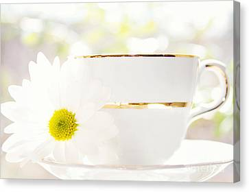 Teacup Filled With Sunshine Canvas Print by Kim Fearheiley
