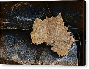 Tears To Fall Canvas Print by Kelly Rader