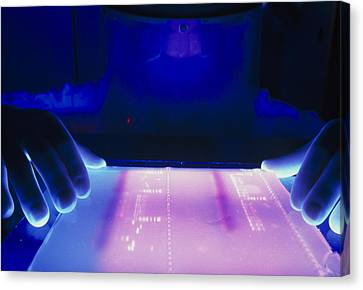 Technician Examines Results Of Dna Electrophoresis Canvas Print by Volker Steger