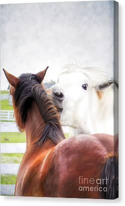 Kentucky Horse Park Canvas Print - Telling Secrets by Darren Fisher
