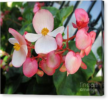 Tender Petals Canvas Print