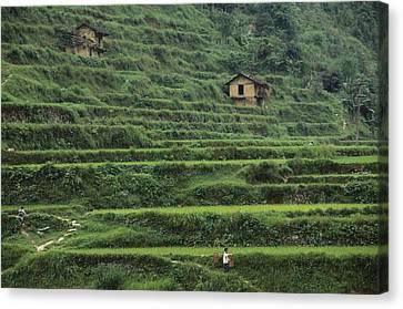 Terraces For Agriculture Canvas Print by Raymond Gehman