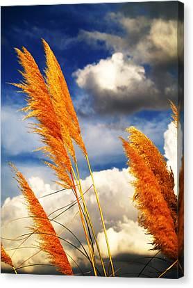 Texas Breeze Canvas Print
