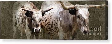 Texas Longhorns Canvas Print by Betty LaRue