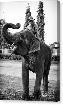 Thai Elephant Roar Canvas Print