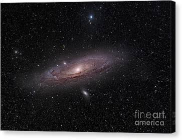 The Andromeda Galaxy Canvas Print by John Davis