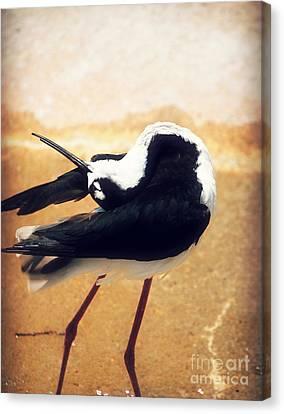 The Ballerina Bird Canvas Print by Peggy Franz