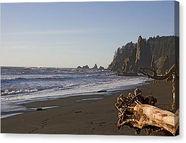 The Beach In Olympic National Park Canvas Print by Taylor S. Kennedy