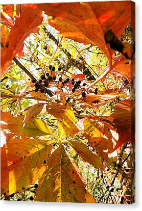 The Beauty In Dying Canvas Print by Trish Hale
