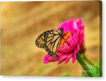 The Beauty Of Flowers Canvas Print by Tamera James