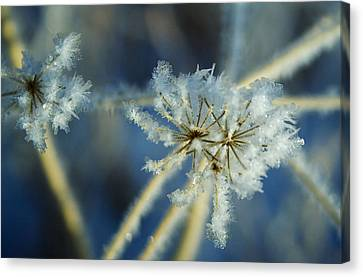 The Beauty Of Winter Canvas Print