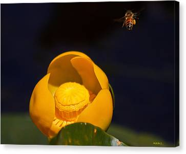 The Bee Canvas Print by Mitch Shindelbower