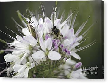 The Beetle And The Bee Canvas Print by Donna Greene