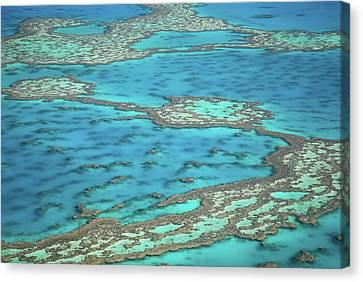 The Big Reef, Whitsunday Islands, Australia Canvas Print by Chantal Ferraro