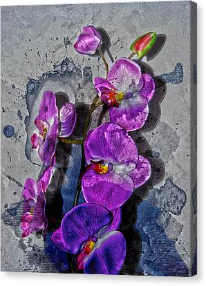 The Blue Orchid  Canvas Print by Jerry Cordeiro