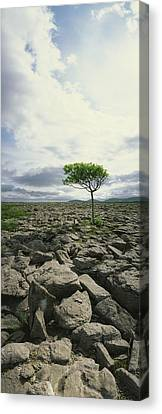 The Burren, On Kinvara Side, Co Clare Canvas Print by The Irish Image Collection
