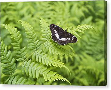 Canvas Print featuring the photograph The Butterfly On Fern Sheet by Aleksandr Volkov