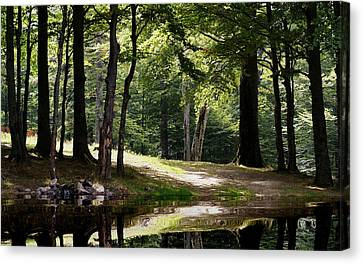 The Calm Of The Forest Canvas Print by Bogdan M Nicolae