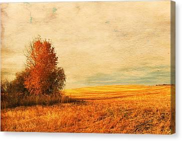 The Careful Breeze  Canvas Print by Jerry Cordeiro