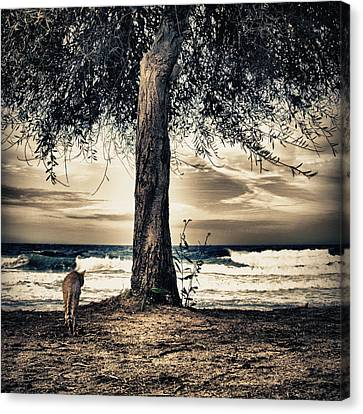 The Cat And The Sea Canvas Print by Stelios Kleanthous