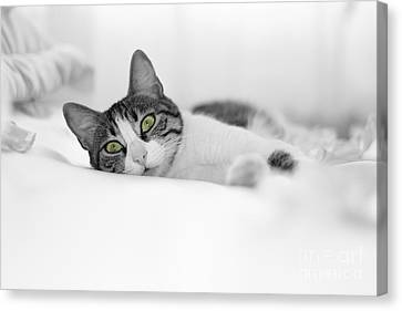 The Cat  Canvas Print by Zafer GUDER