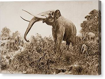 Chatham Canvas Print - The Chatham Elephant. From Fossil by Ken Welsh