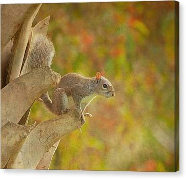 Fox Squirrel Canvas Print - The Climber by Kim Hojnacki