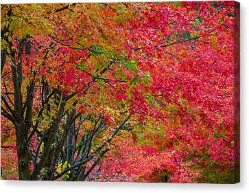 Canvas Print featuring the photograph The Color Of Fall by Ken Stanback
