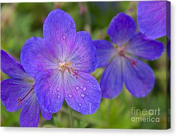 The Color Purple Canvas Print by Sean Griffin