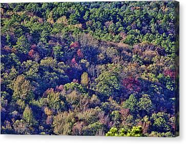 The Colors Of Autumn Canvas Print by Douglas Barnard