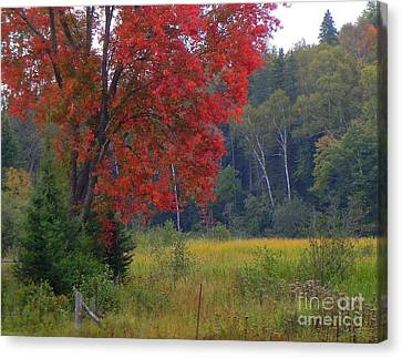 The Colors Of Fall Canvas Print by Anne Gordon