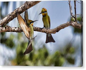 Top-end Canvas Print - The Courtship by Douglas Barnard